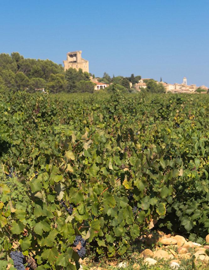 Vignes de Châteauneuf-du-Pape