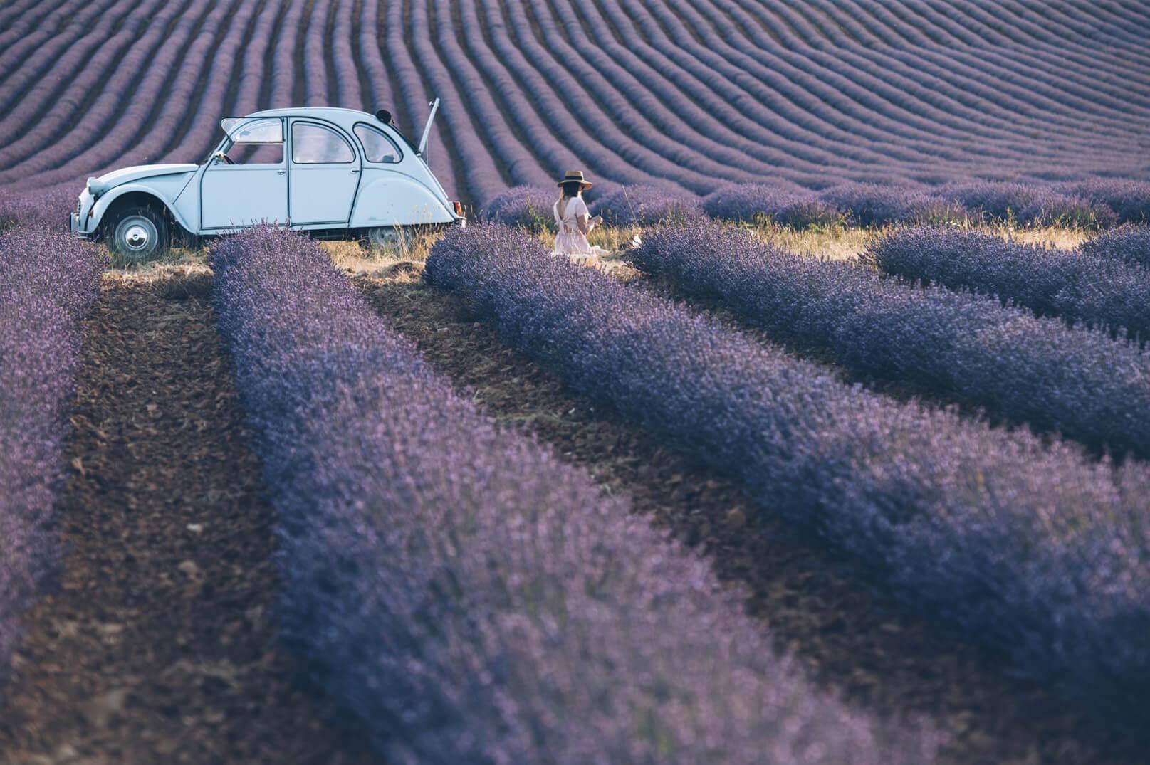 Lavendel in der Papstenklave