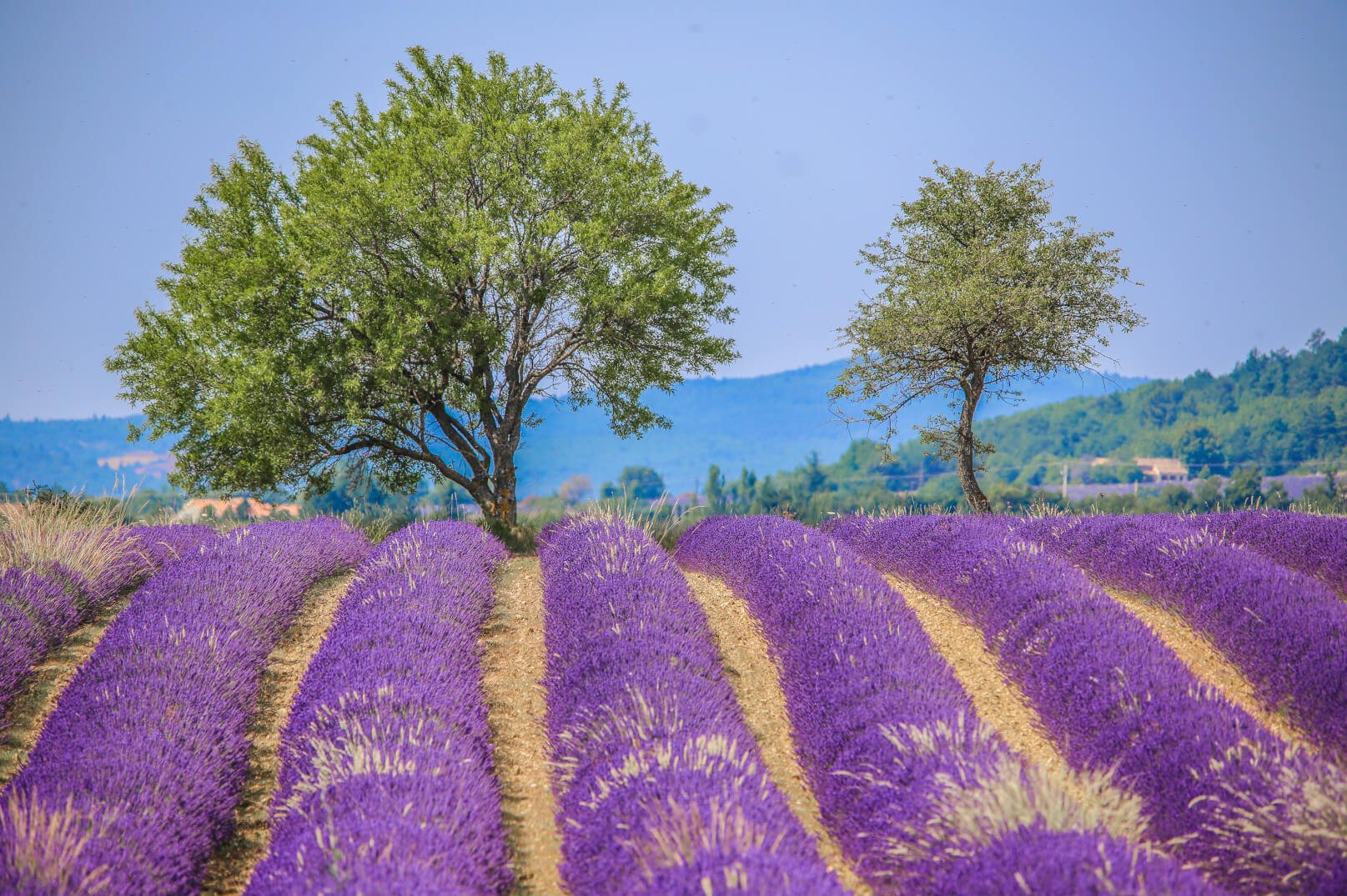 Wochenende im Land des Lavendels