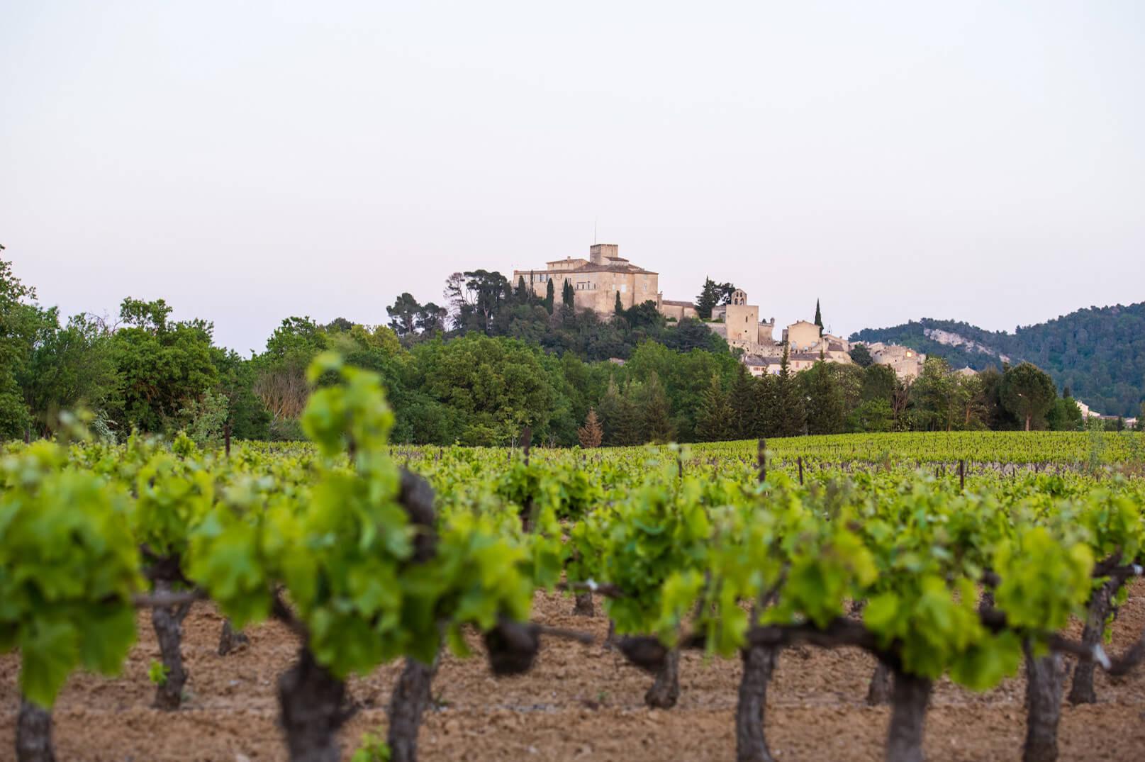 Die Weingärten des Luberon