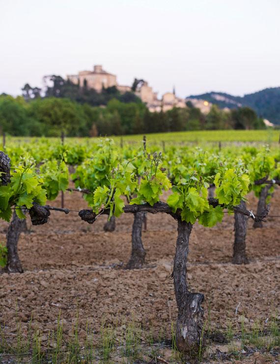 Vignobles du Luberon @ Coquard