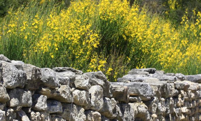 Auf botanischen Wegen im Vaucluse