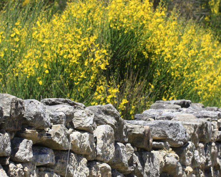Auf botanischen Wegen im Vaucluse © Hocquel