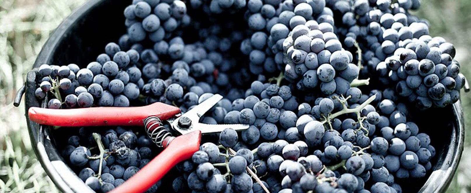 Die besten Möglichkeiten, den Weinberg einmal anders zu entdecken  © Chateau-Pesquier
