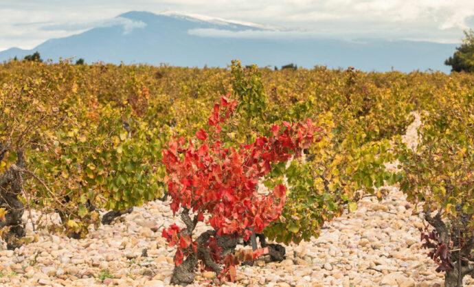 Weine und Weinbaugebiete - RhôneTal
