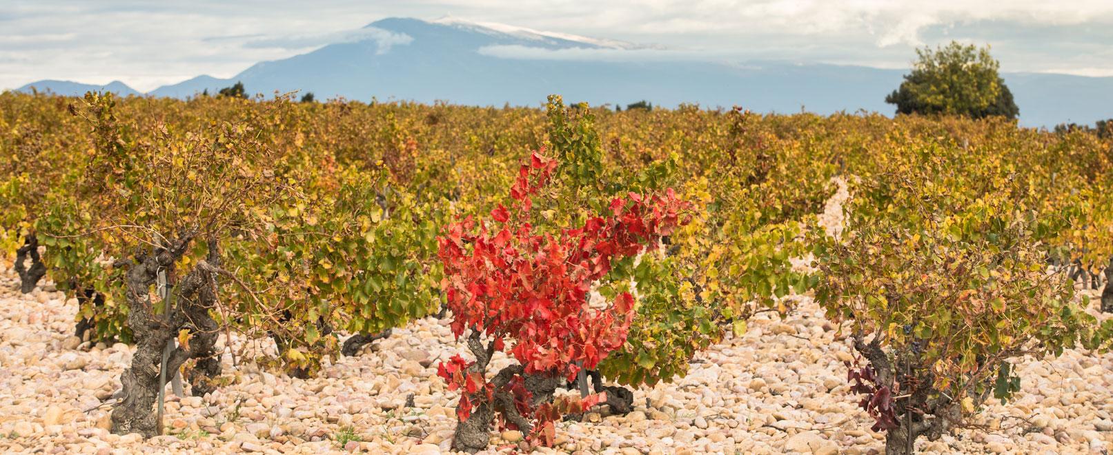 Weine und Weinbaugebiete – RhôneTal © Kessler